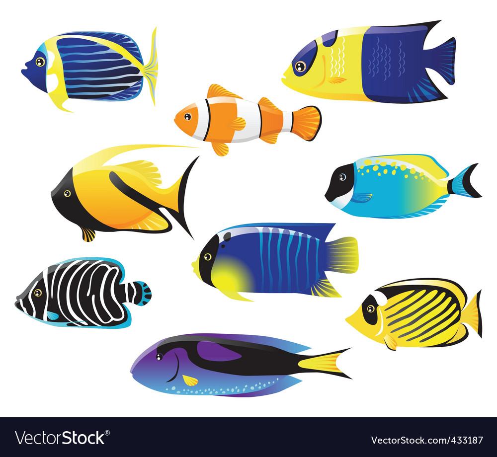 Tropical fish vector image