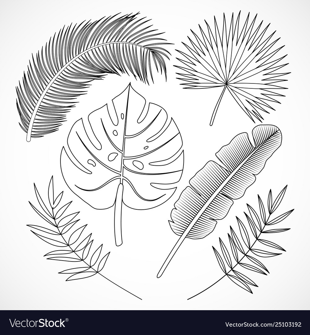 Palm Leaves Silhouette Set Outline Royalty Free Vector Image With this file you will be able to create awesome and unique greeting cards, invitations, logos, posters, wedding designs, scrapbooking design and any type of designs with cute hand drawn tropical leaves. vectorstock
