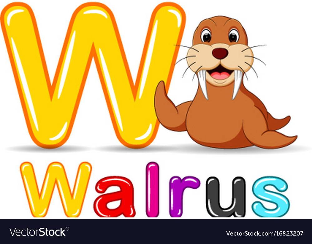 Animals alphabet w is for walrus