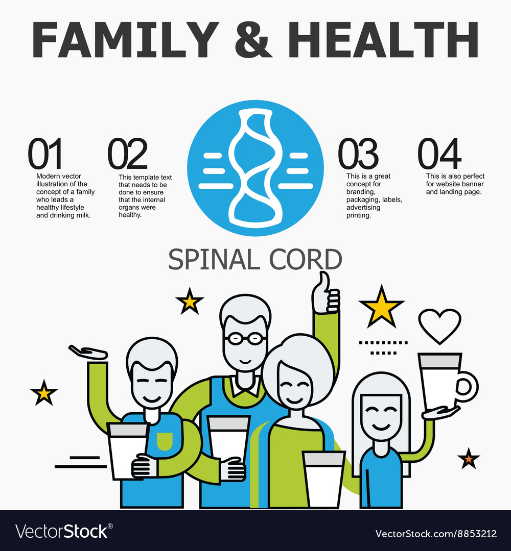 Internal Organs Spinal Cord Royalty Free Vector Image