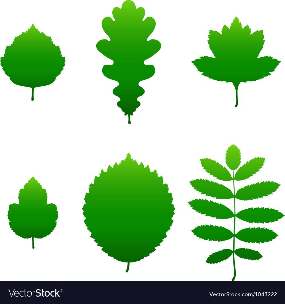 Green leaf silhouettes
