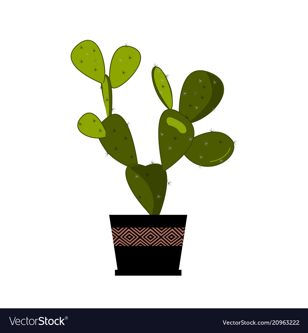 Prickly pear cactus in pot traditional mexican