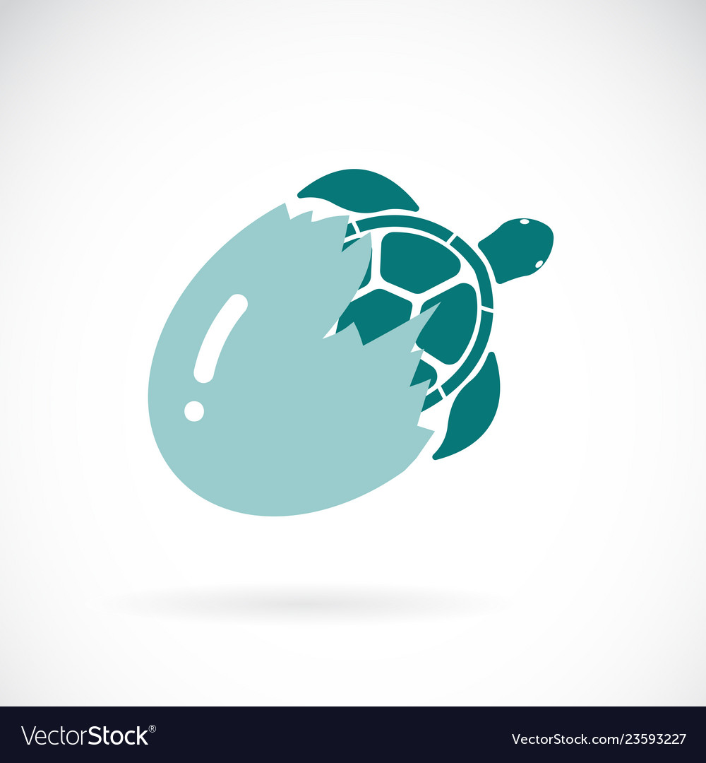 Turtle coming out of the egg on a white