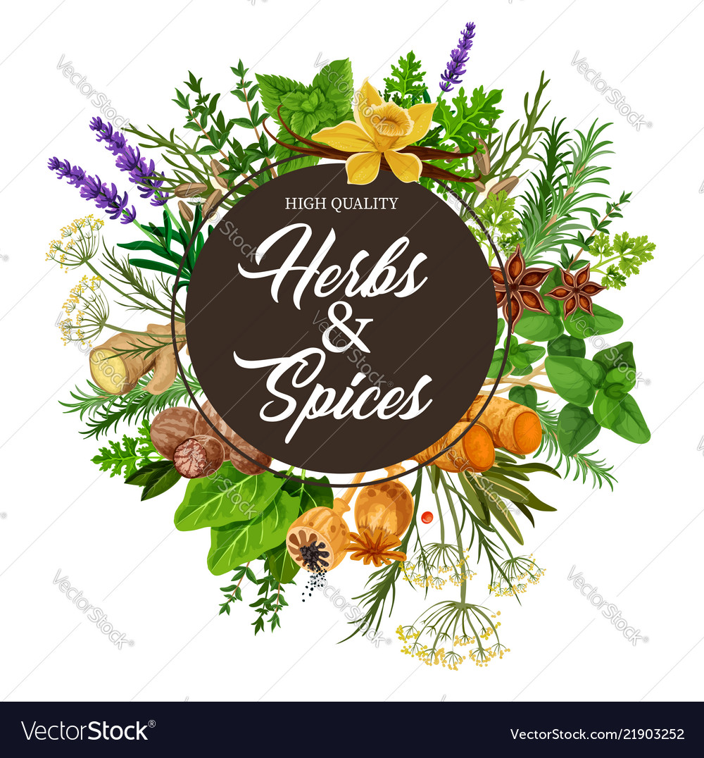 Herbs and spices with frame of plants