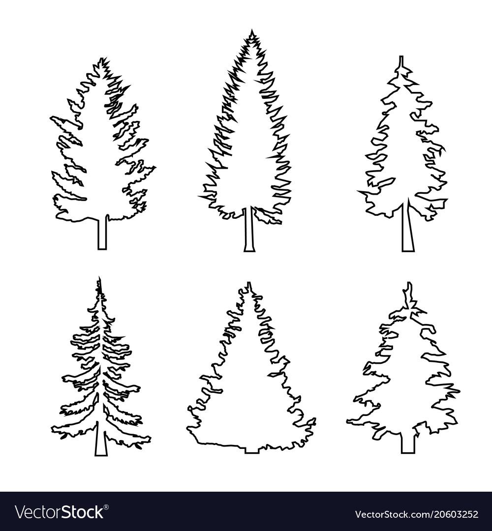 Set of conifer trees pine nature design element