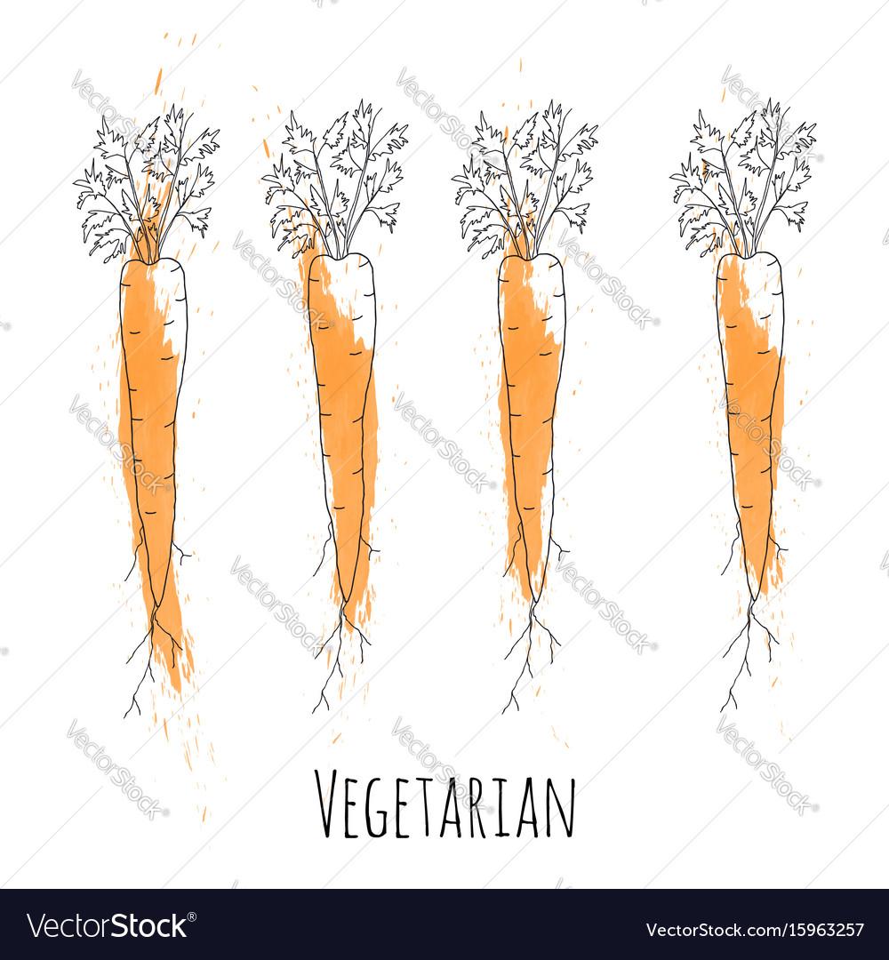 Set of fresh orange ripe carrots