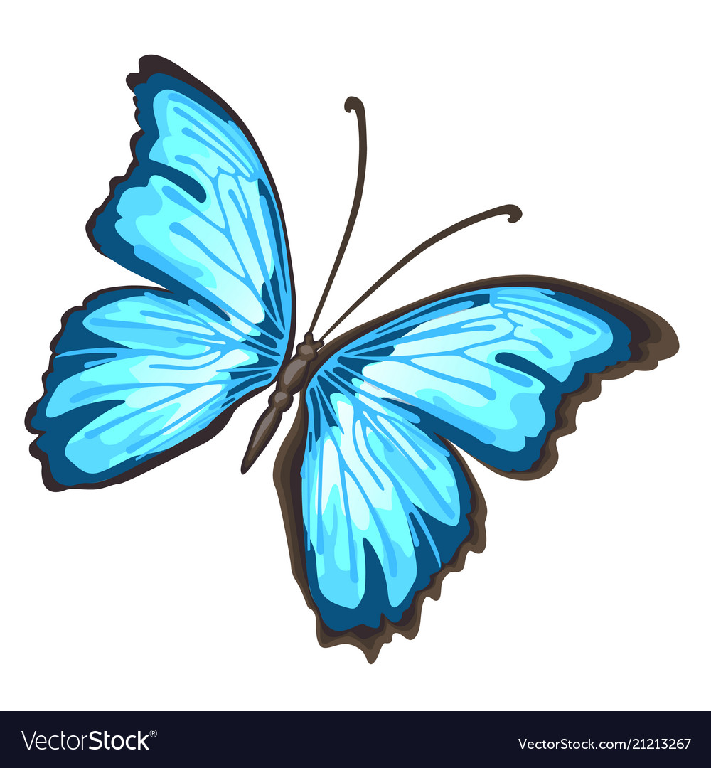 Cartoon butterfly with blue wings isolated on