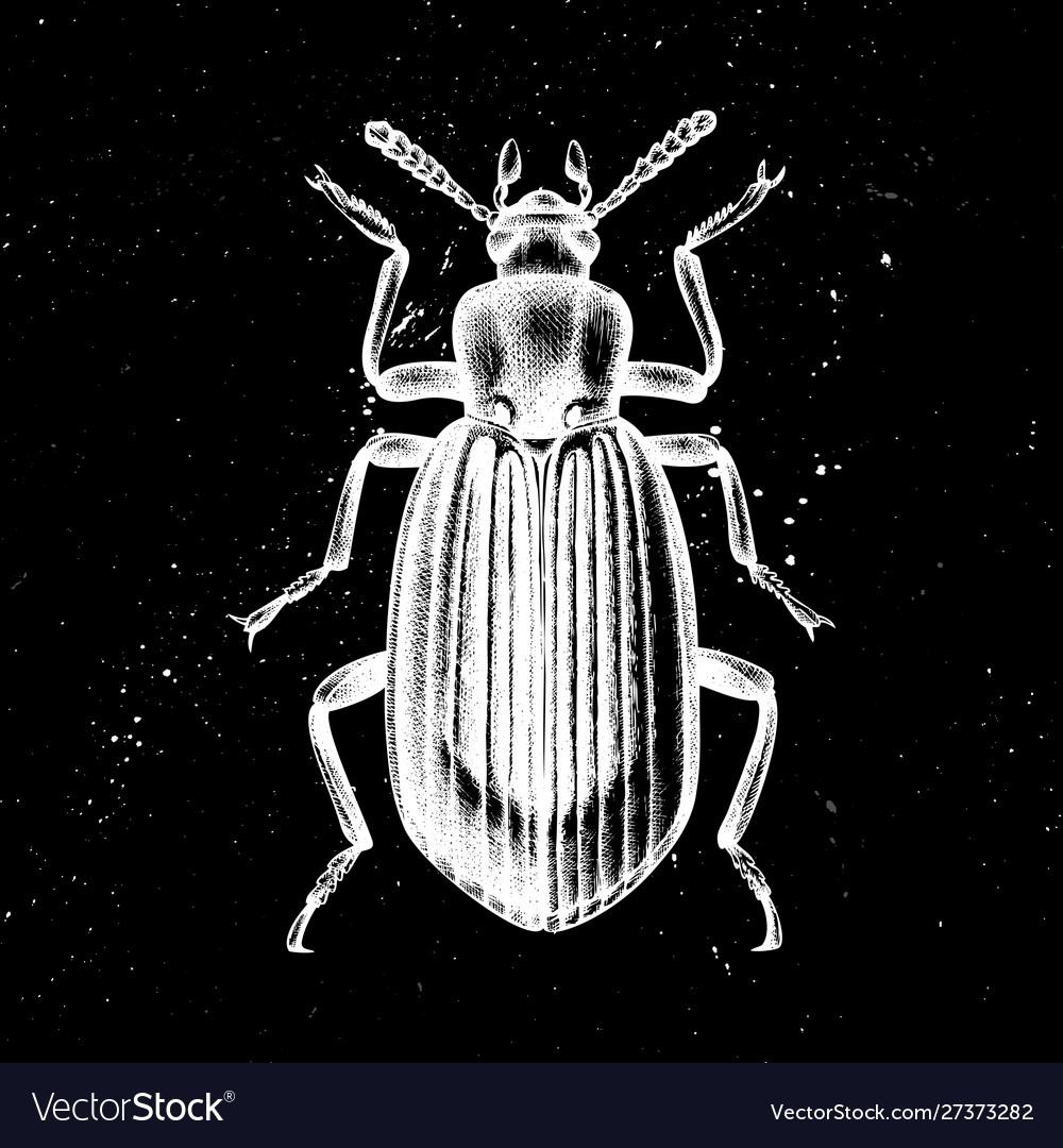 Hand drawn darkling beetle mystic entomolog