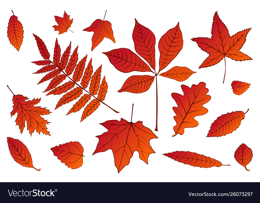 Collection beautiful colorful set autumn leaves