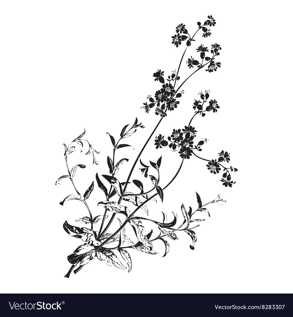 Botanical branches with flowers isolated herbal vector image