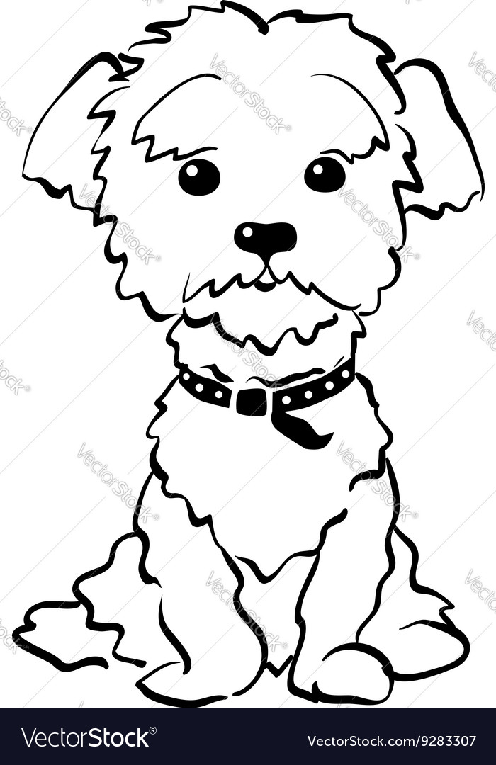 Sketch funny maltese dog sitting