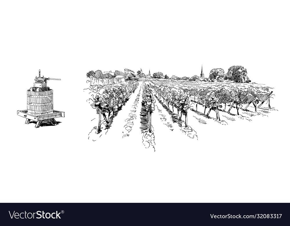 Vineyard landscape france sketch design