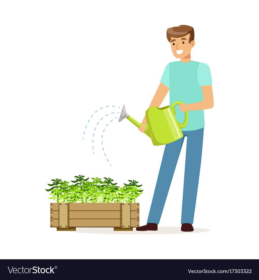 Young Smiling Man Watering Plants In Wooden Box Vector Image
