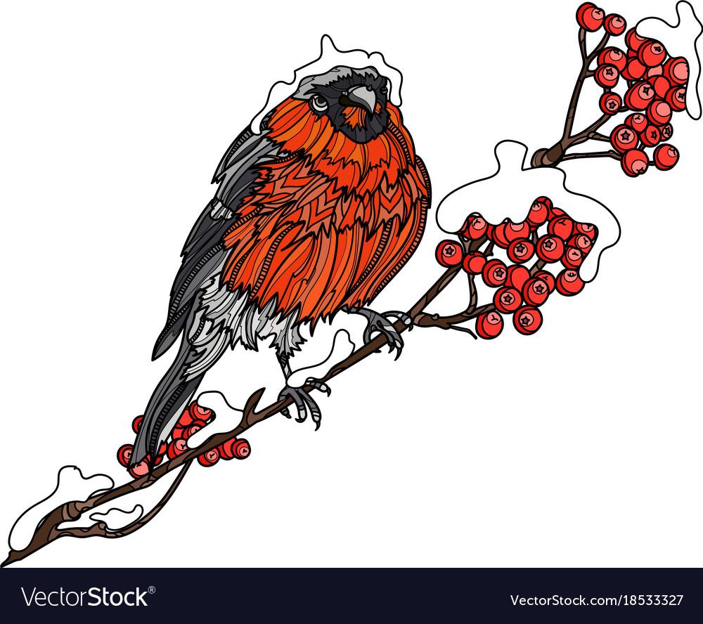 Bullfinch on the branch of mountain ash