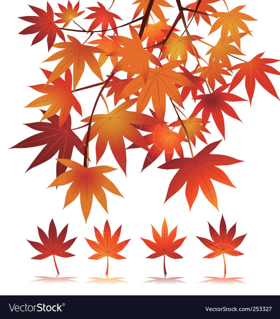 Maple vector image