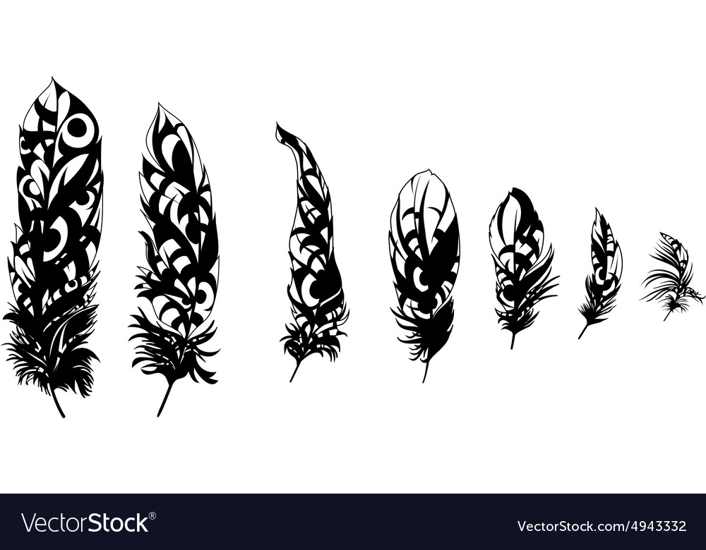 Black feathers vector image