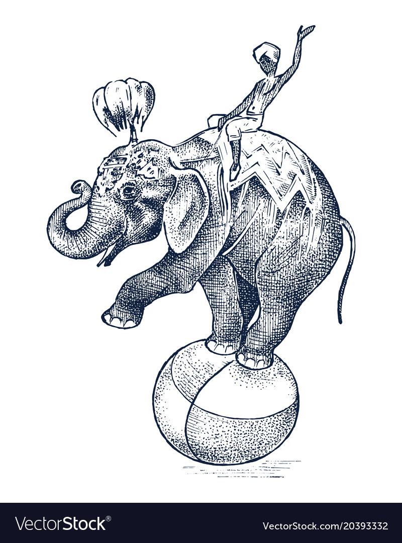 Circus elephant african wild animal on the ball
