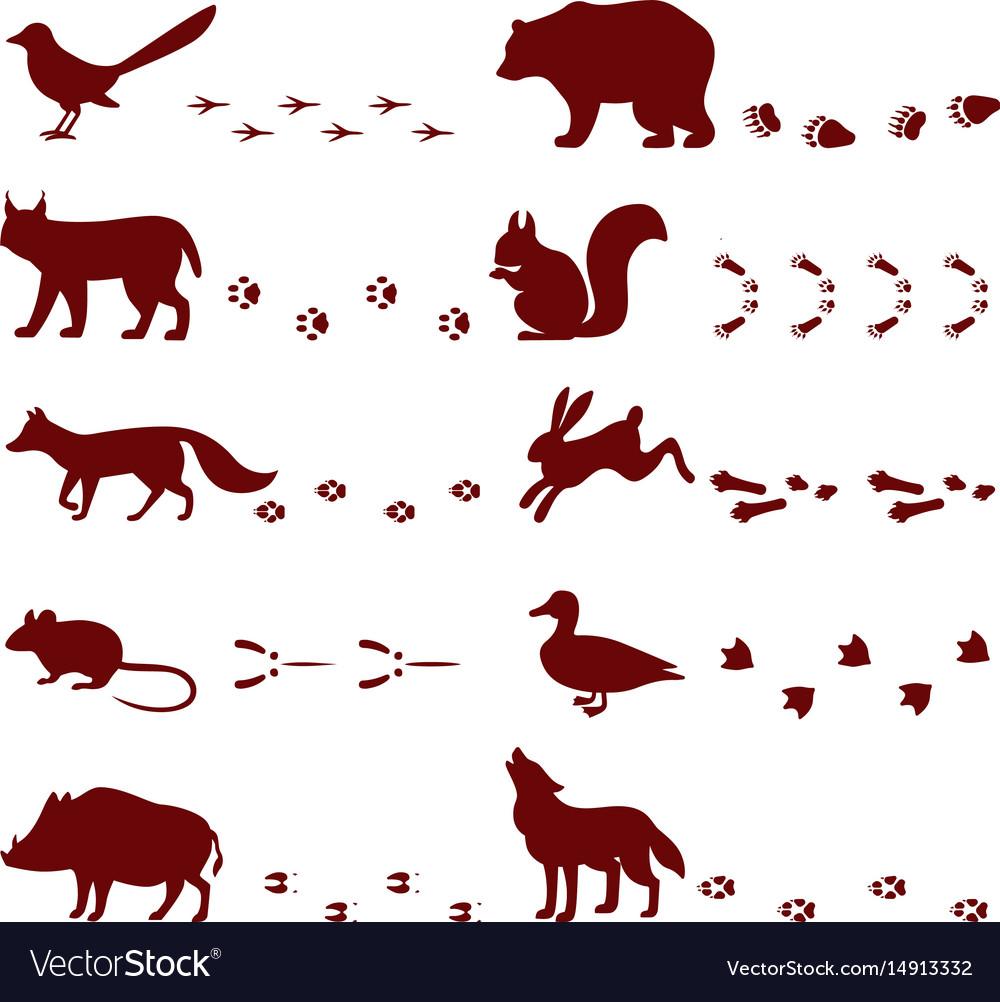 Traces of animals foot steps set contour