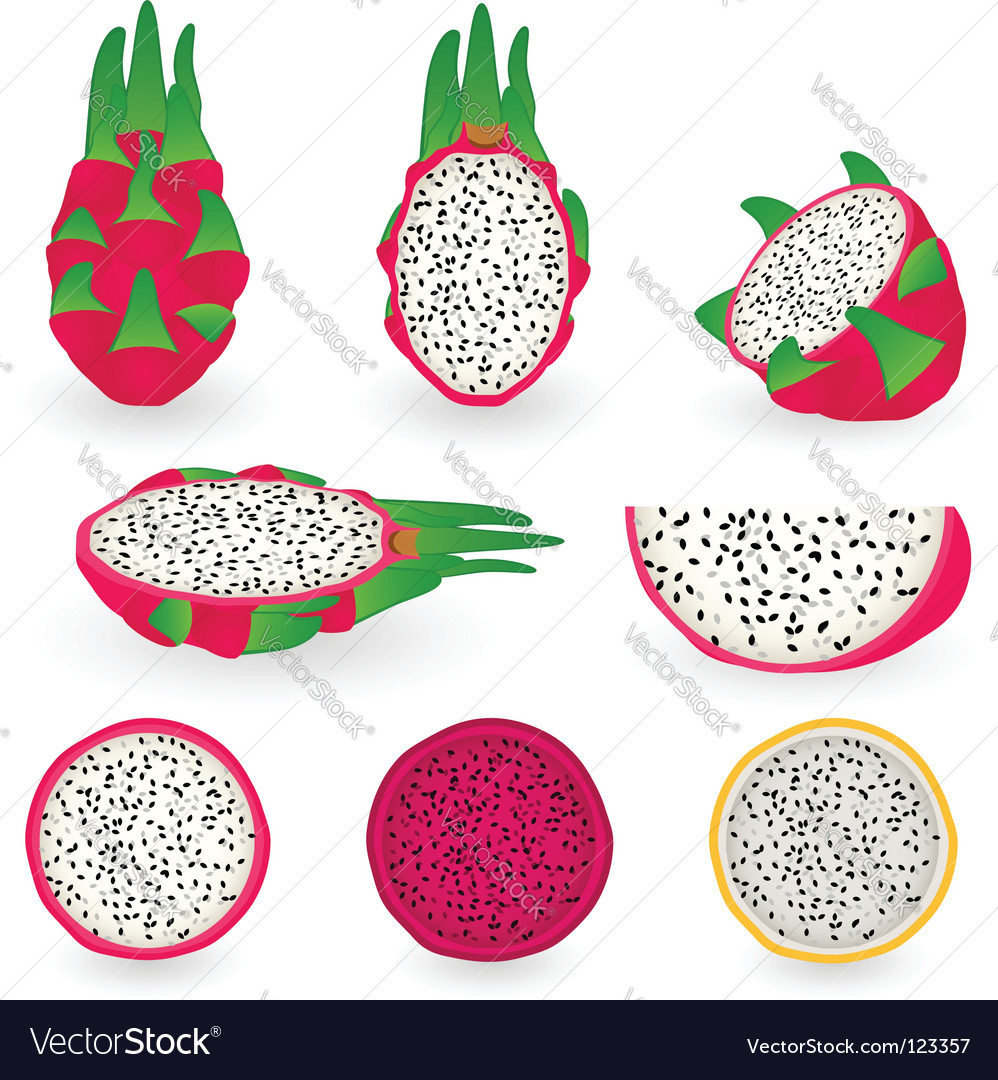 Dragon fruit vector image