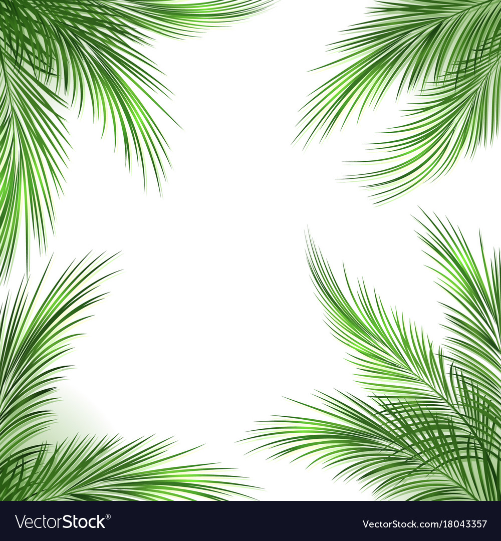 palm leaves frame royalty free vector image vectorstock