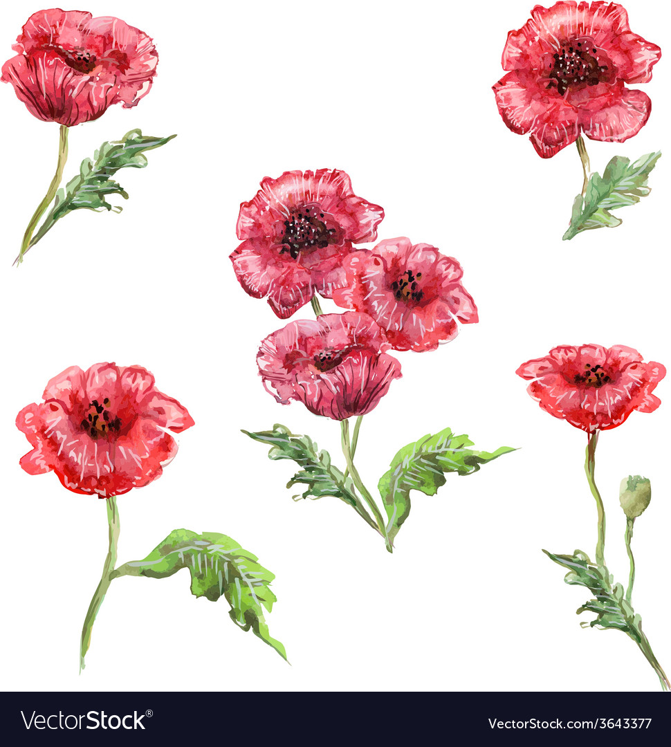 Watercolor painting set poppies