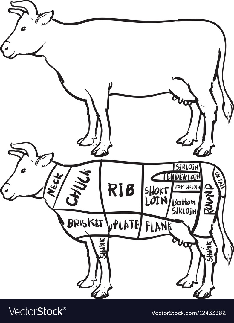 Diagram Of Cow Schematics Wiring Diagrams Meat Cut A Block And Schematic U2022 Rh Lazysupply Co Parts