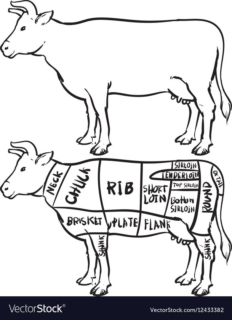 Cow cuts diagram and butchery set