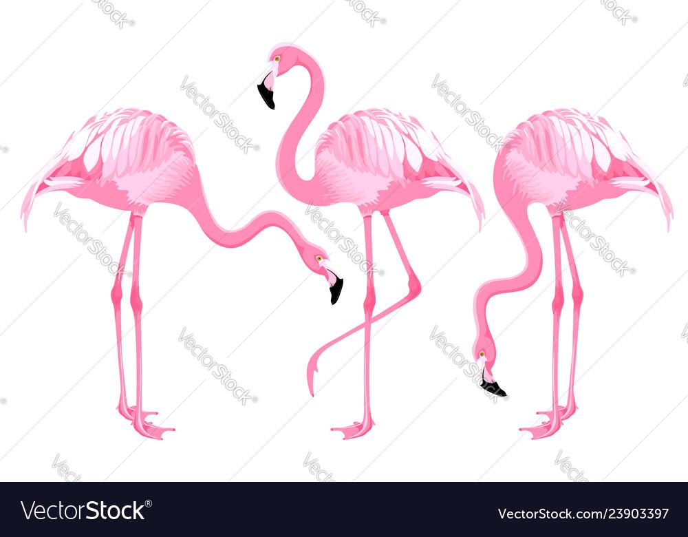 Pink flamingo set