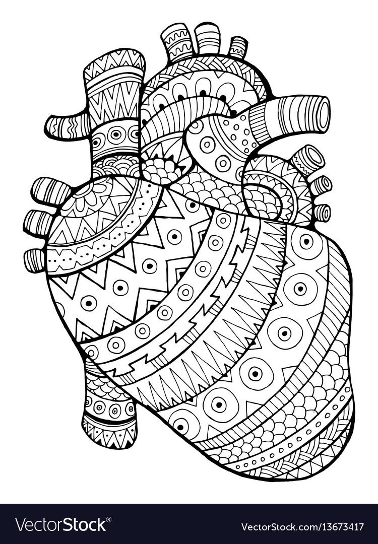 - Human Heart Coloring Book Royalty Free Vector Image