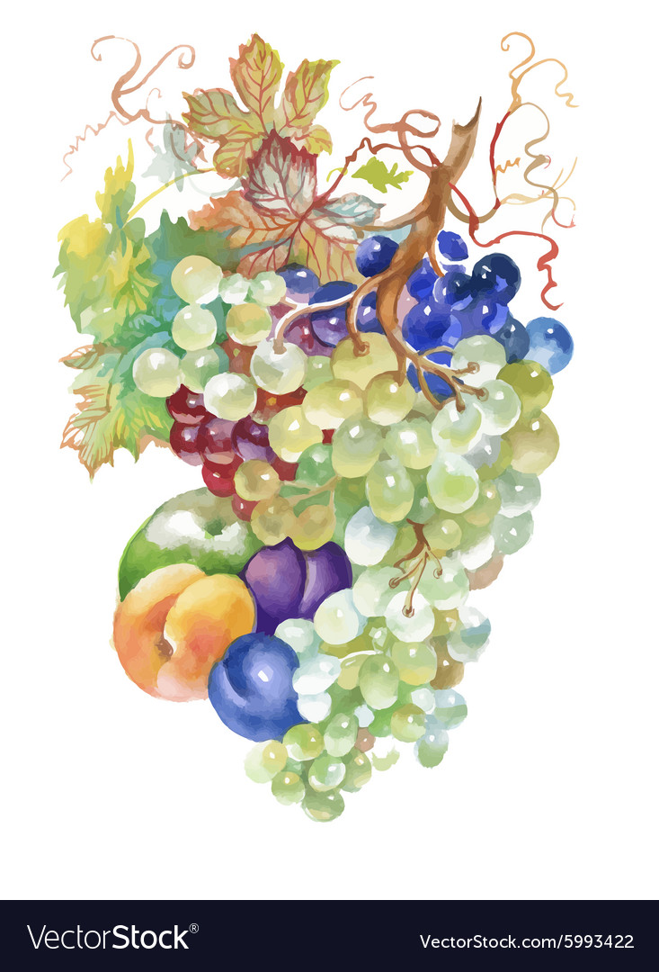Hand drawn watercolor painting of fruits