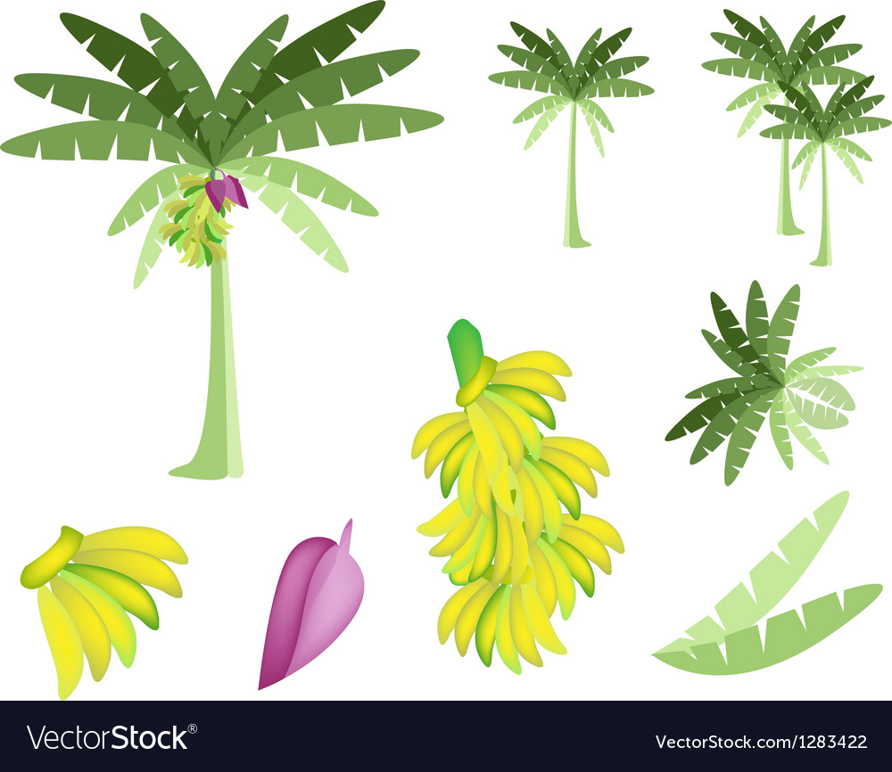 Set of Banana Tree with Bananas and Blossom vector image