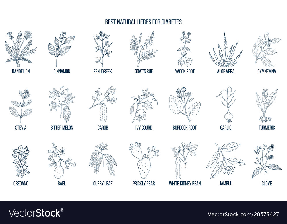 Herbs and spices that fight against diabetes vector image on VectorStock