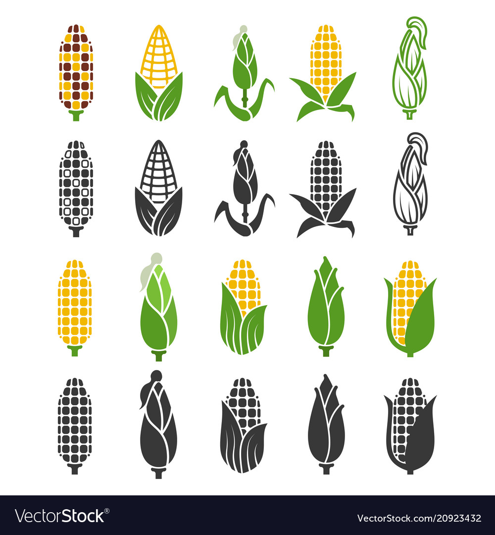 Black and color corn harvest icons isolated on
