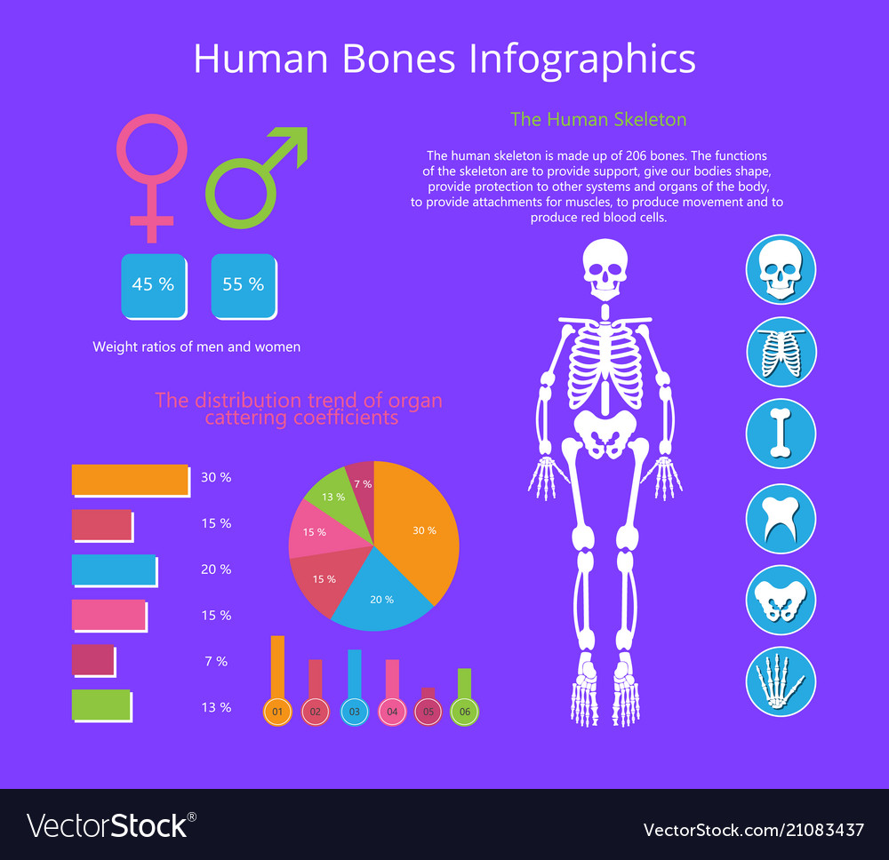 Human bones infographics colorful poster