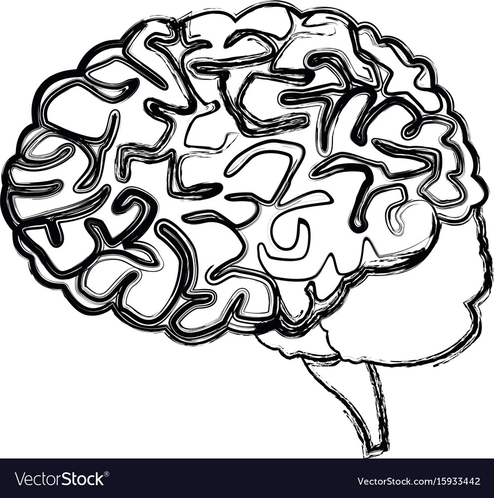 Human brain for medical healthy memory anatomy Vector Image