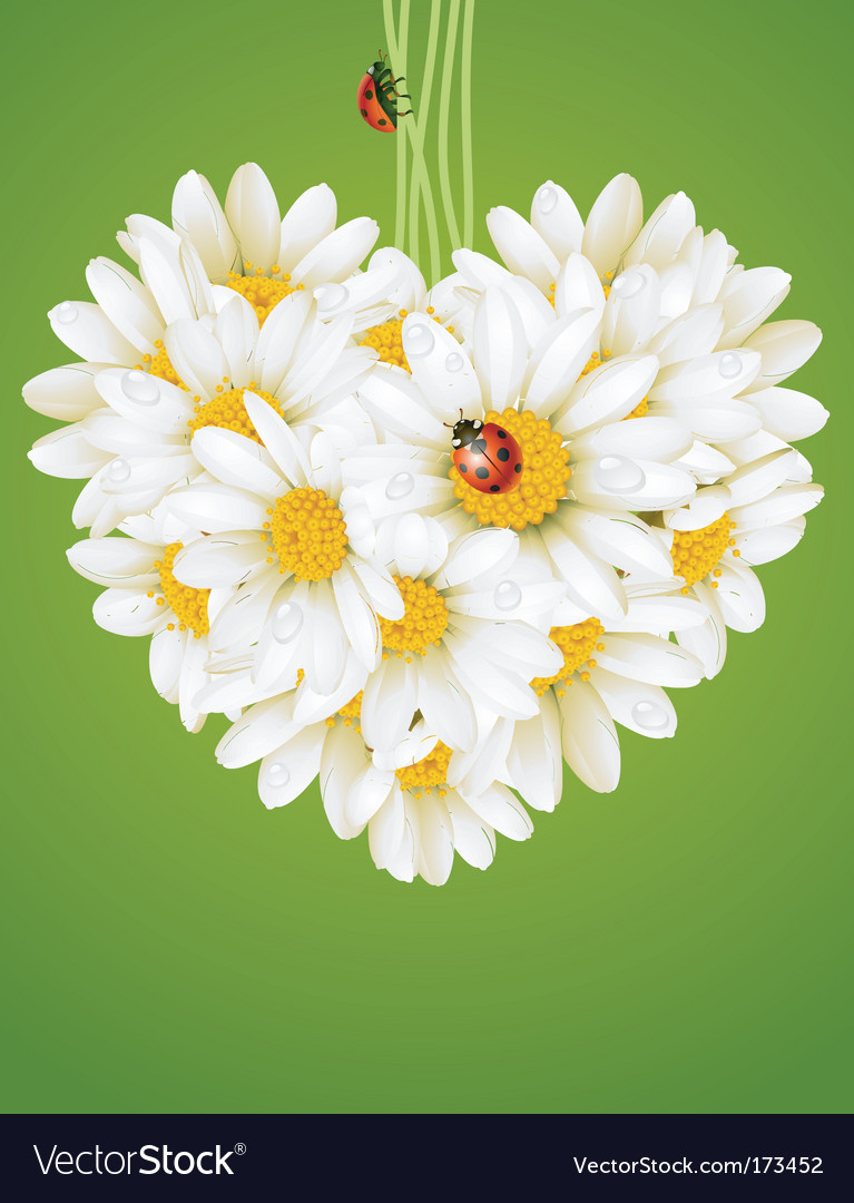 Floral love card chamomile heart vector image