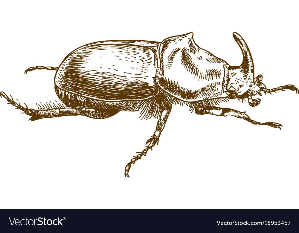 engraving drawing of rhinoceros beetle royalty free vector