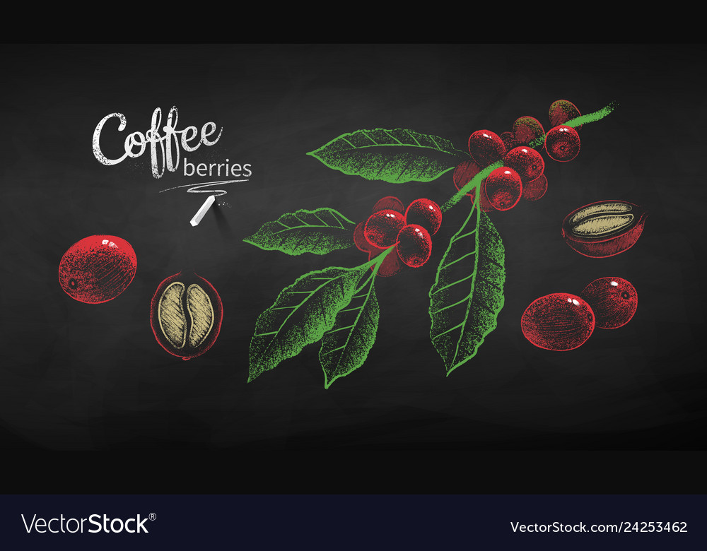 Sketches set of coffee branch and berries