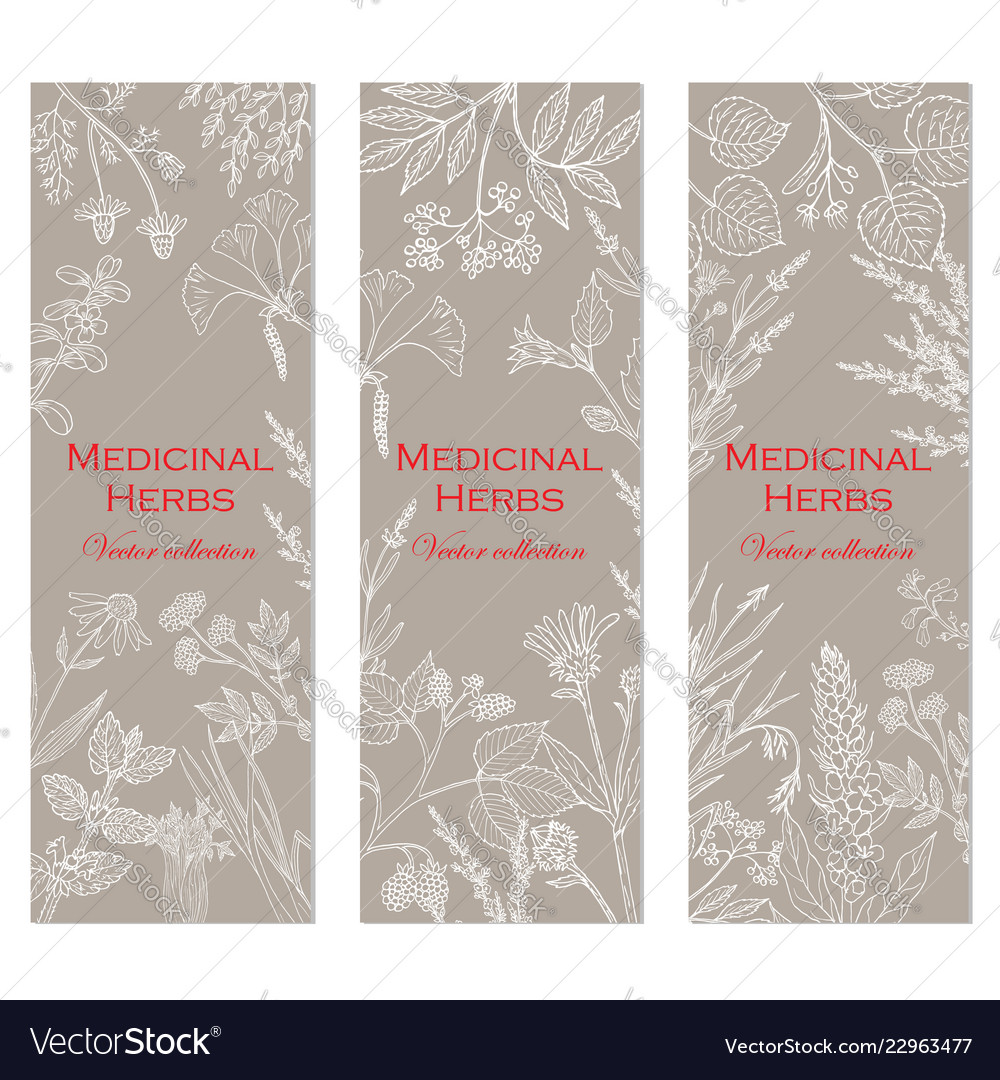 Banners with hand drawn medicinal herbs and plants