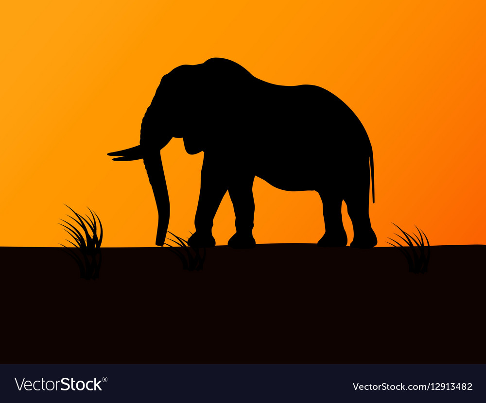 Silhouette elephant on background sunset
