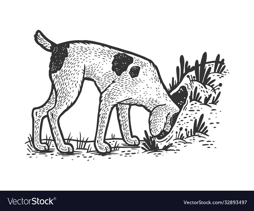 Hunting dog looking for fox in hole sketch