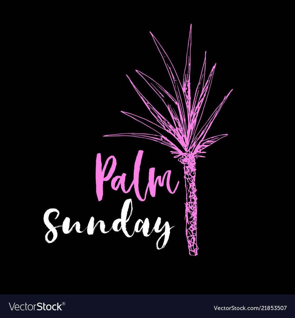 Coconut palm or queen palmae with leaves poster