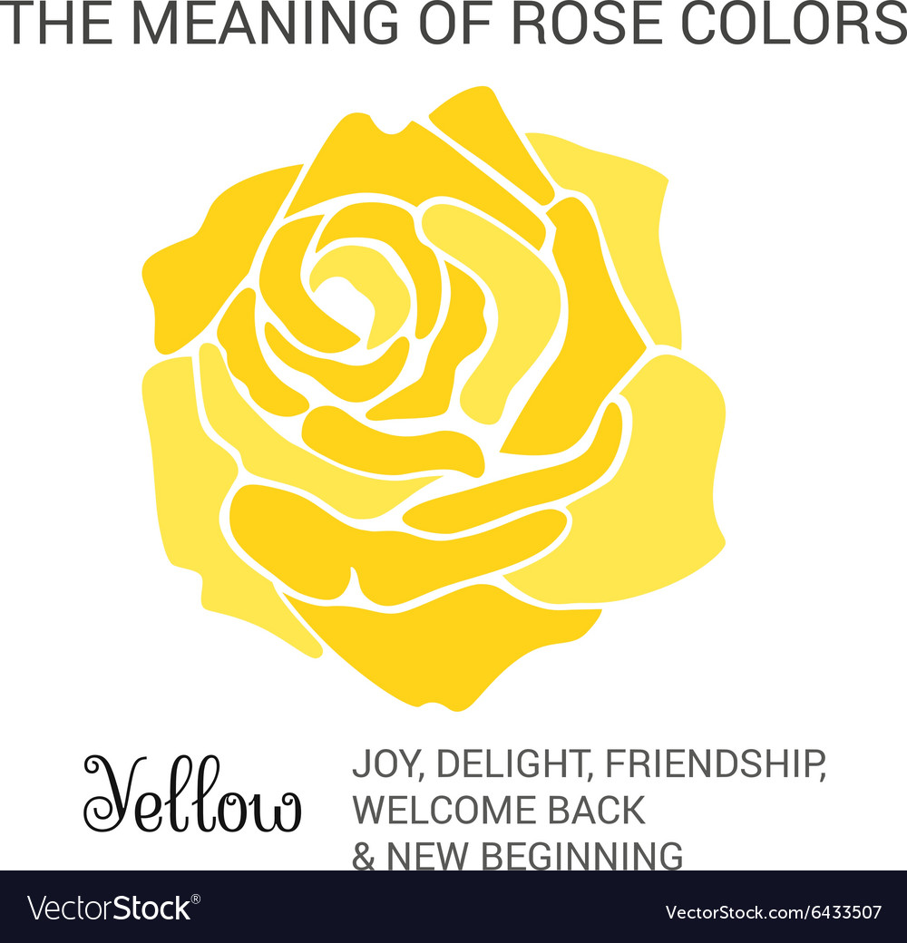 Yellow rose infographics