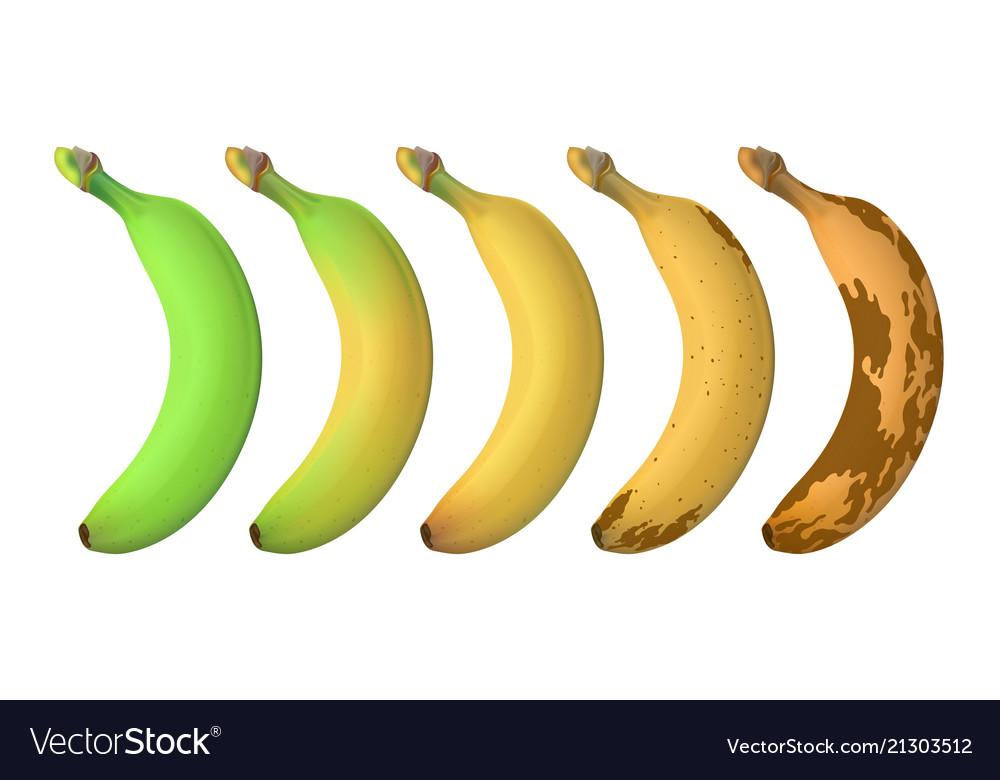 Banana fruit ripeness levels from green underripe