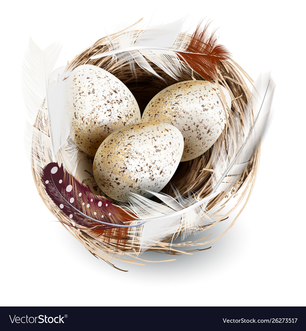 Realistic nest eggs and feathers
