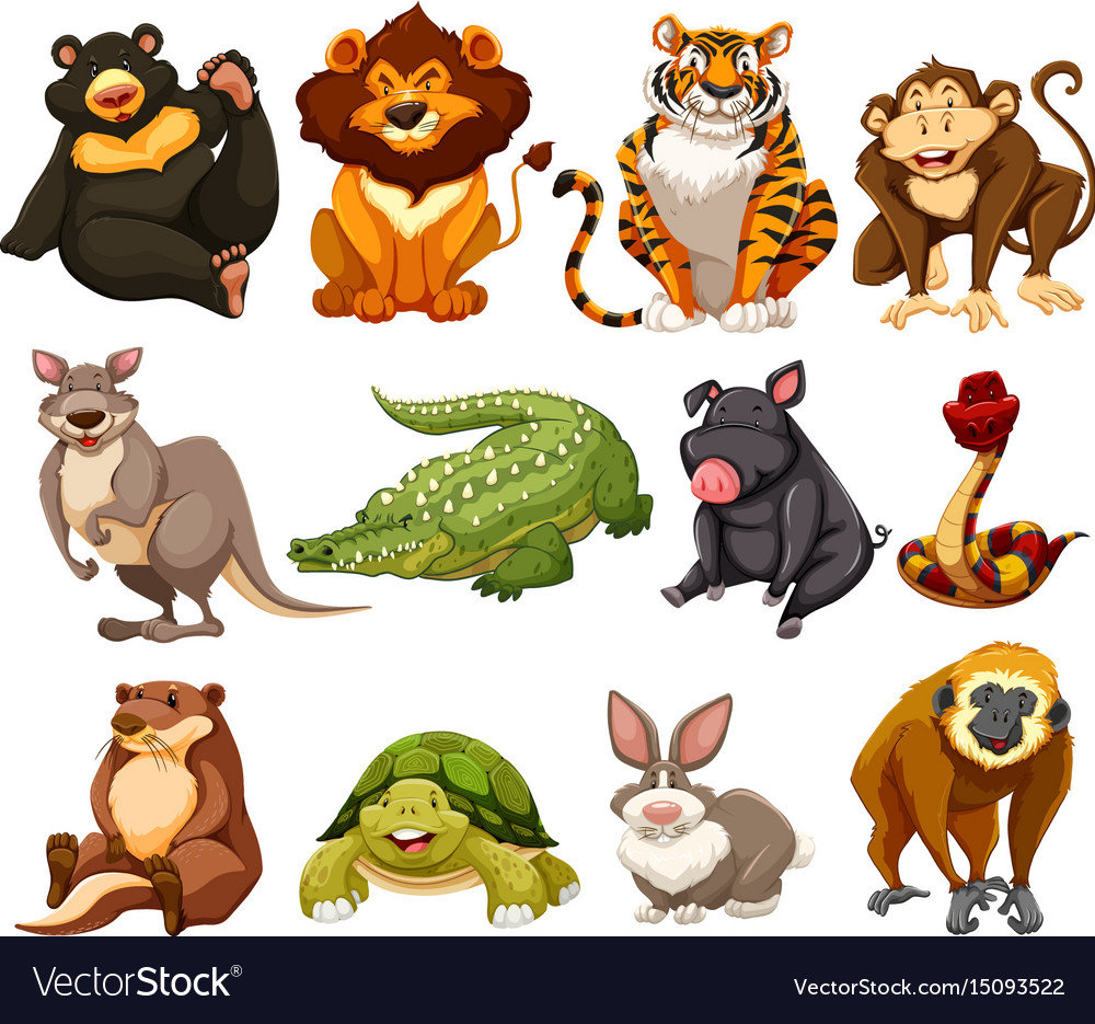 different kinds of jungle animals royalty free vector image