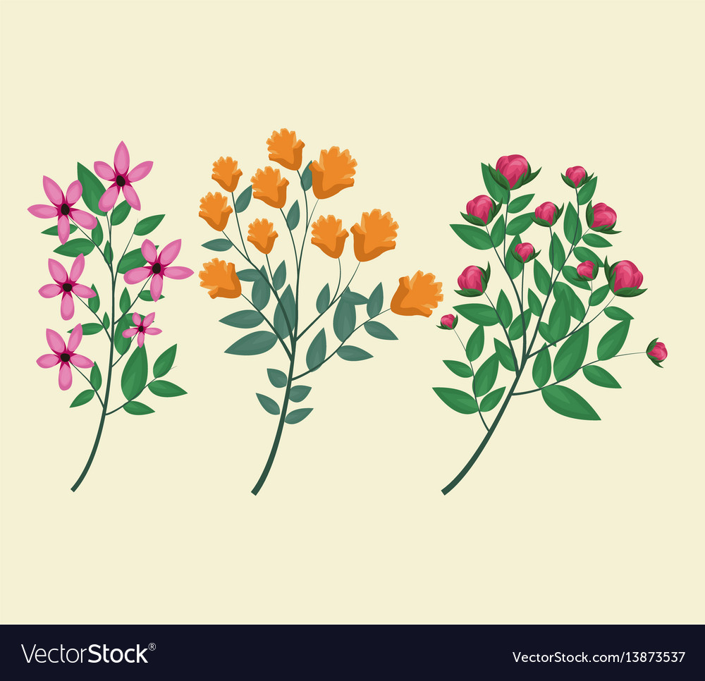 Flowers plant spring decorative vector image