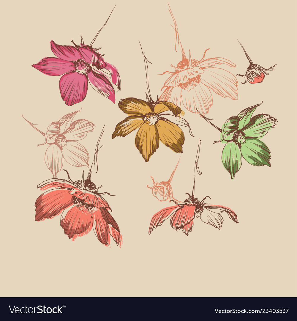 Spring floral background wild flowers falling