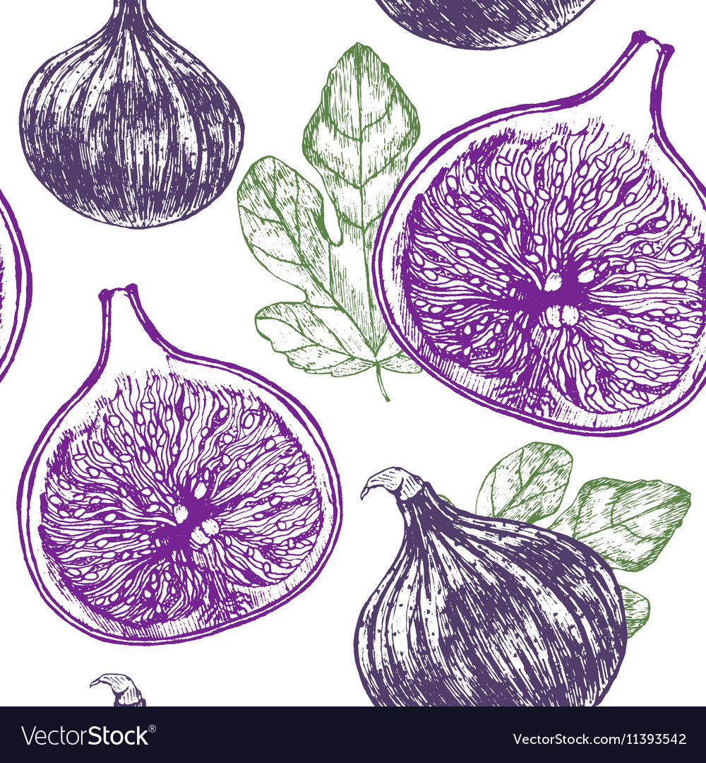Fig Fruit Hand Draw Sketch Background Pattern
