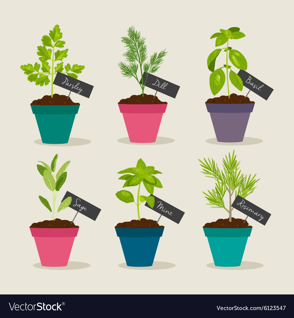 Herb Garden With Pots Of Herbs Royalty Free Vector Image